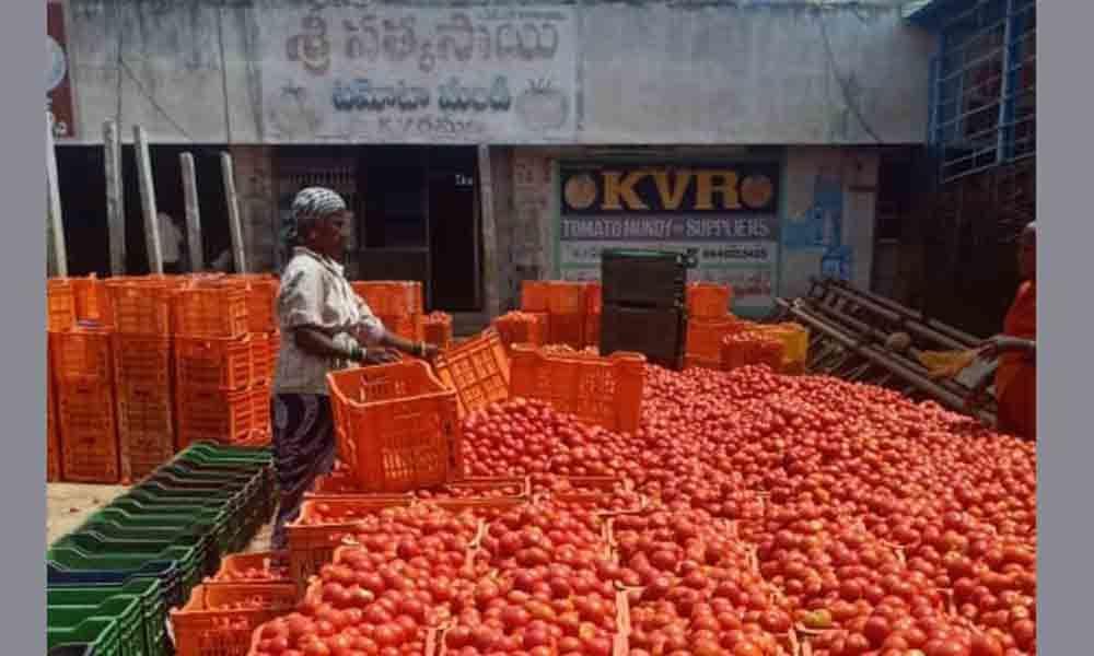 Dwindling tomato prices hit farmers hard in Tirupati