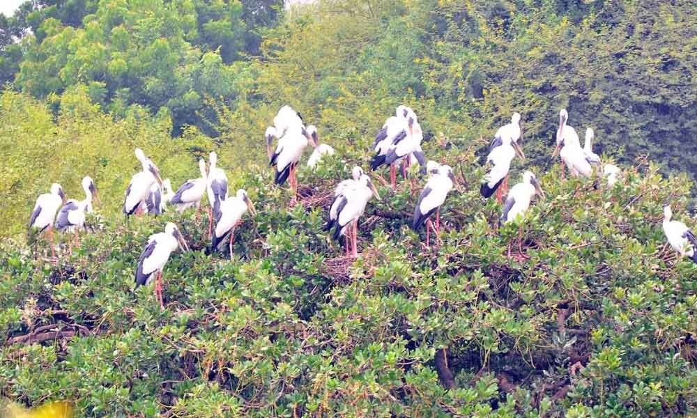 Bountiful rains advance visit of winged guests