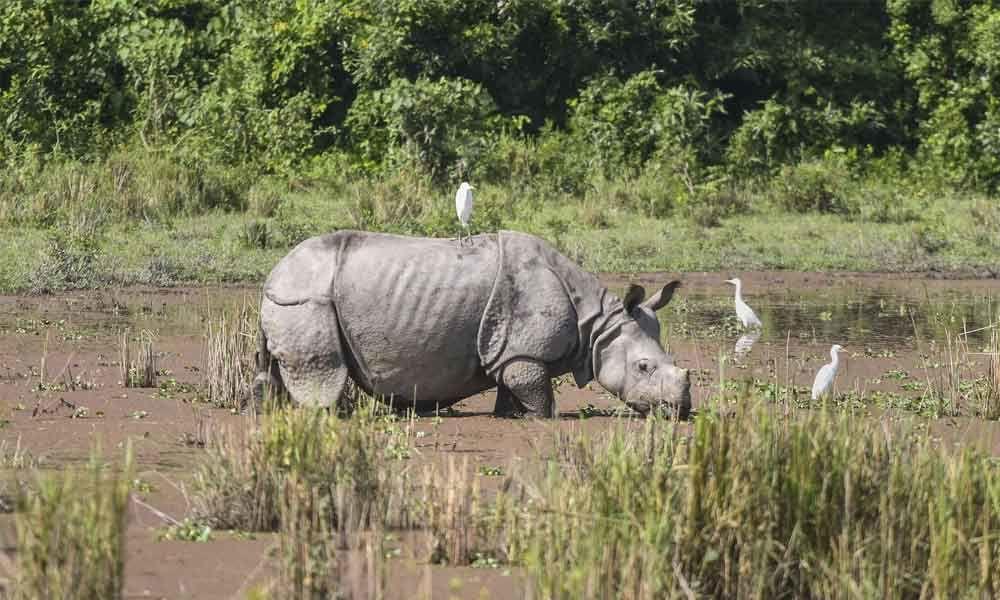 Kaziranga reopens for tourists after monsoon
