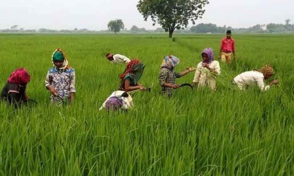 Purchasing centres not yet opened, farmers anxious