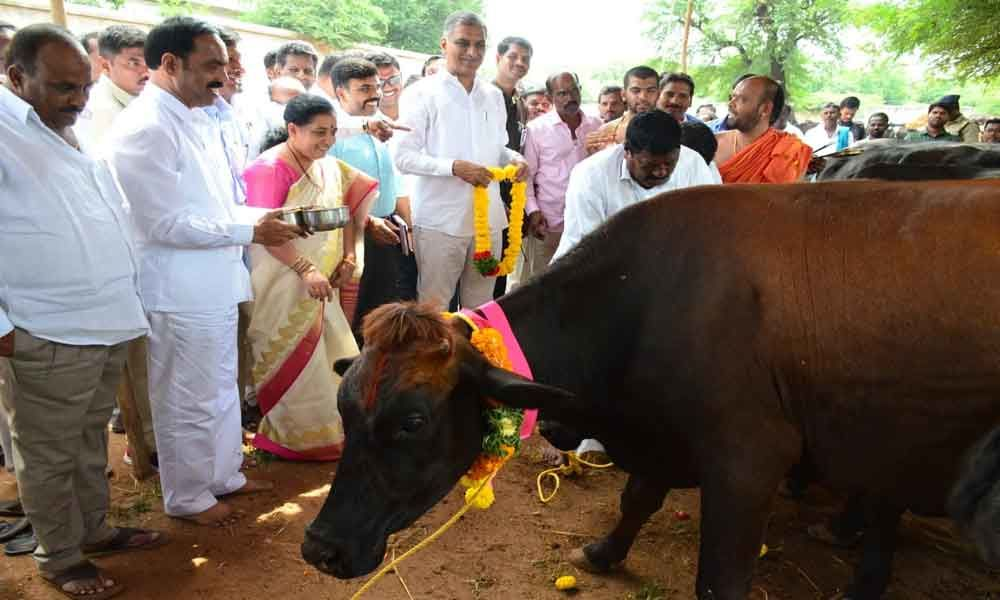 Harish distributes cattle to farmers