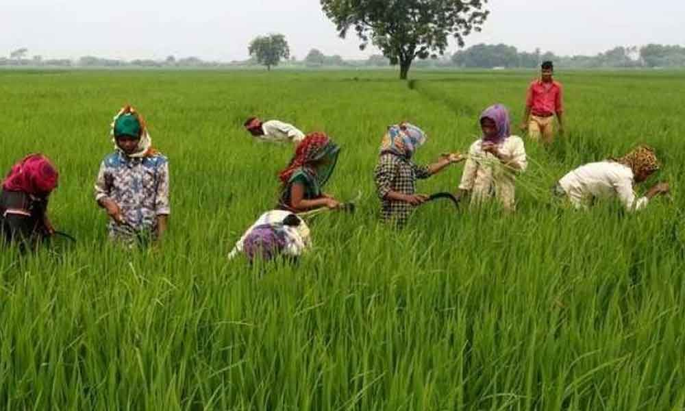 Ruthu Bharosa: 30 % farmers yet to get aiddue to inactive bank accounts