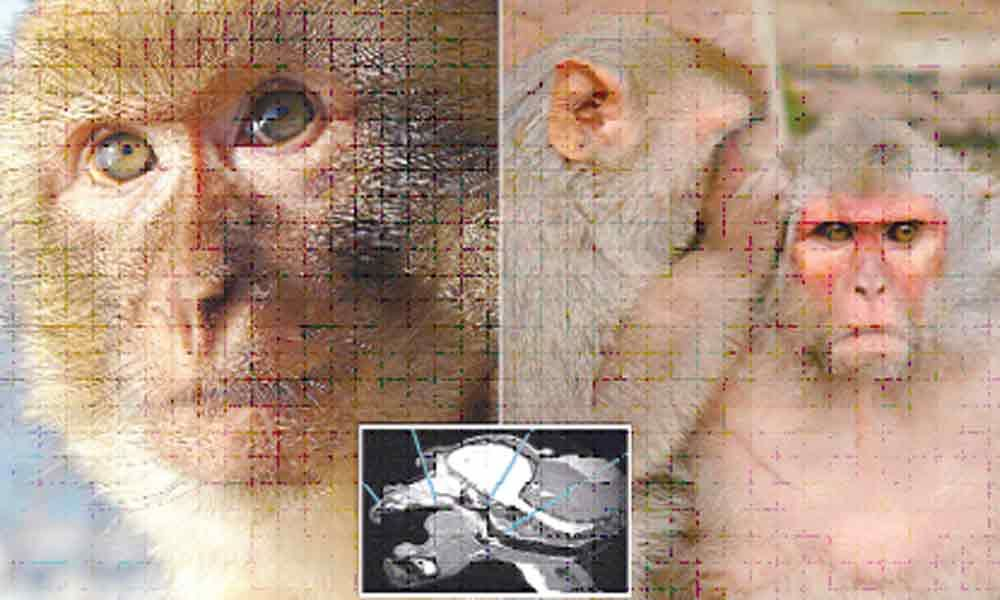 Brain circuit generating conscious awareness unravelled in monkeys