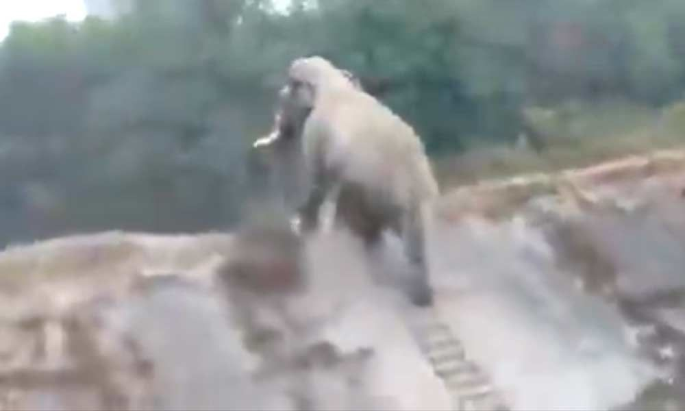 Viral Video: An elephant seems to climb stairs? Have you ever seen this? No? Watchto get Amazed