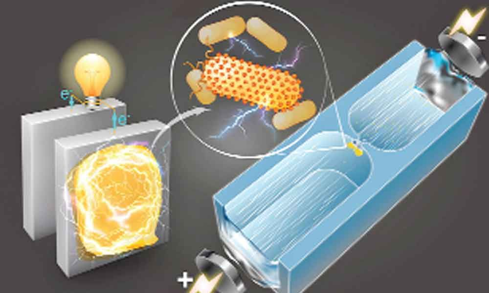 Novel device can generate electricity from air using bacterial protein: Study
