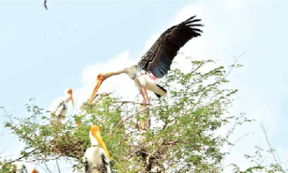 Khammam village comes to life with winged visitors