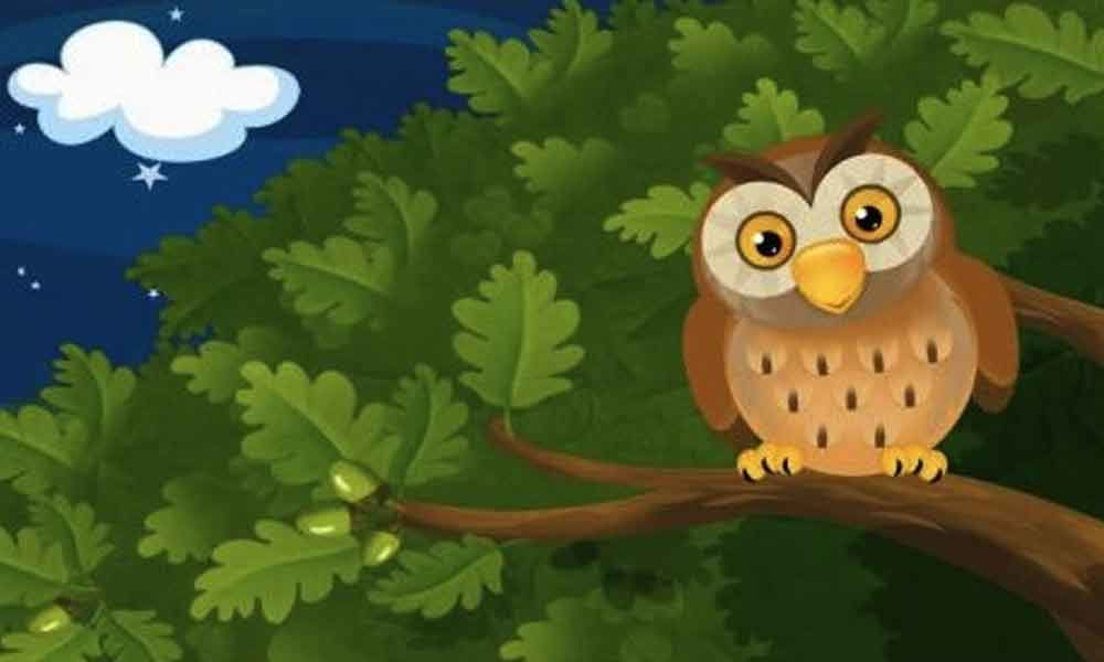 Story Time: The owl and the nightingale
