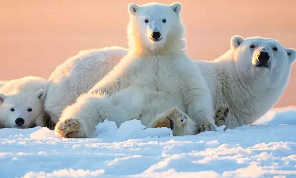 Today is: International Polar Bear Day