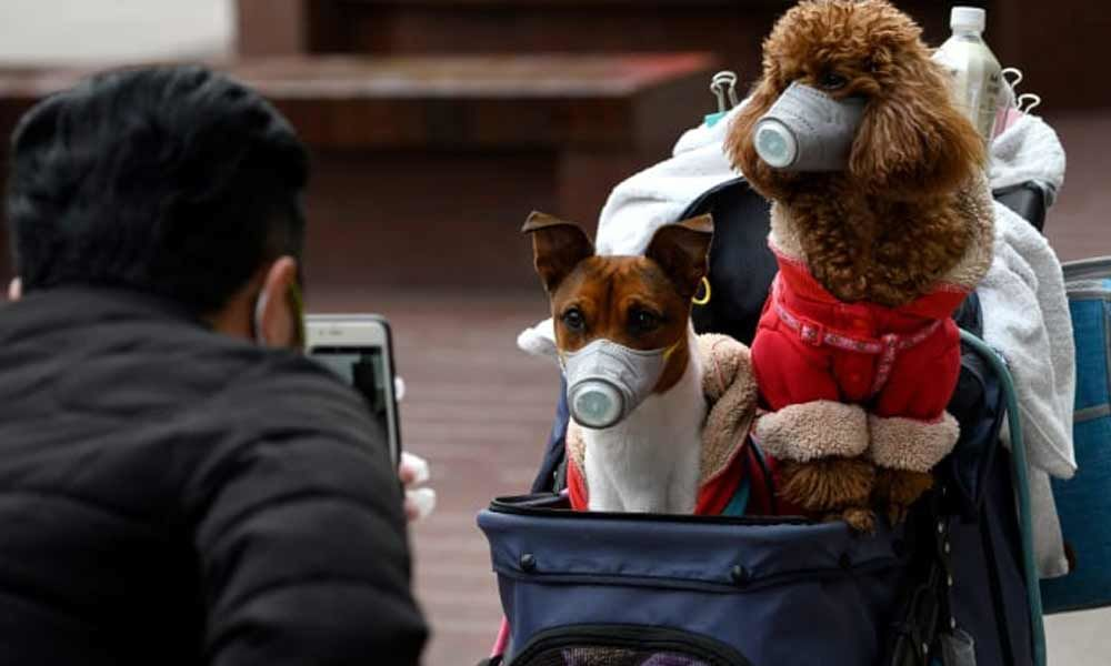 """A Pet dog of a Coronavirus patient in Hong Kong  tested """"weak"""" positive for COVID-19"""