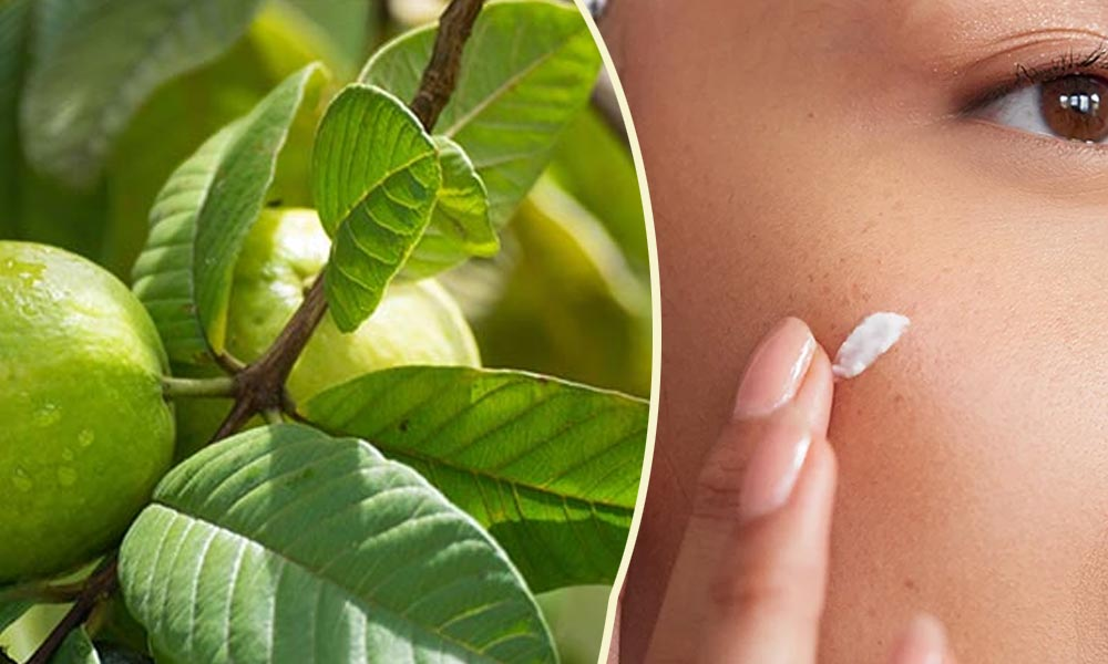Guava Leaves are Great for Skin