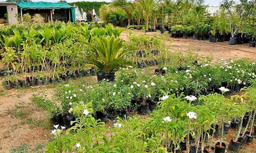 Officials gear up for 5th Haritha Haram