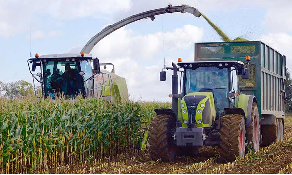 Farmers offered better prices for maize harvest in the market