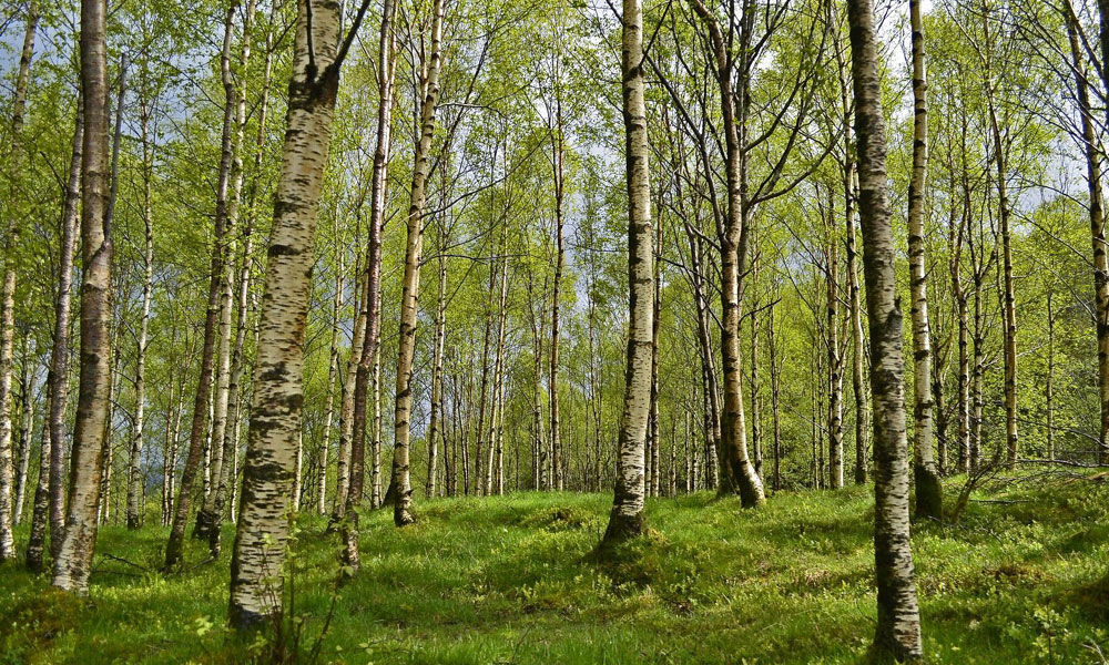 Learn about trees & forests