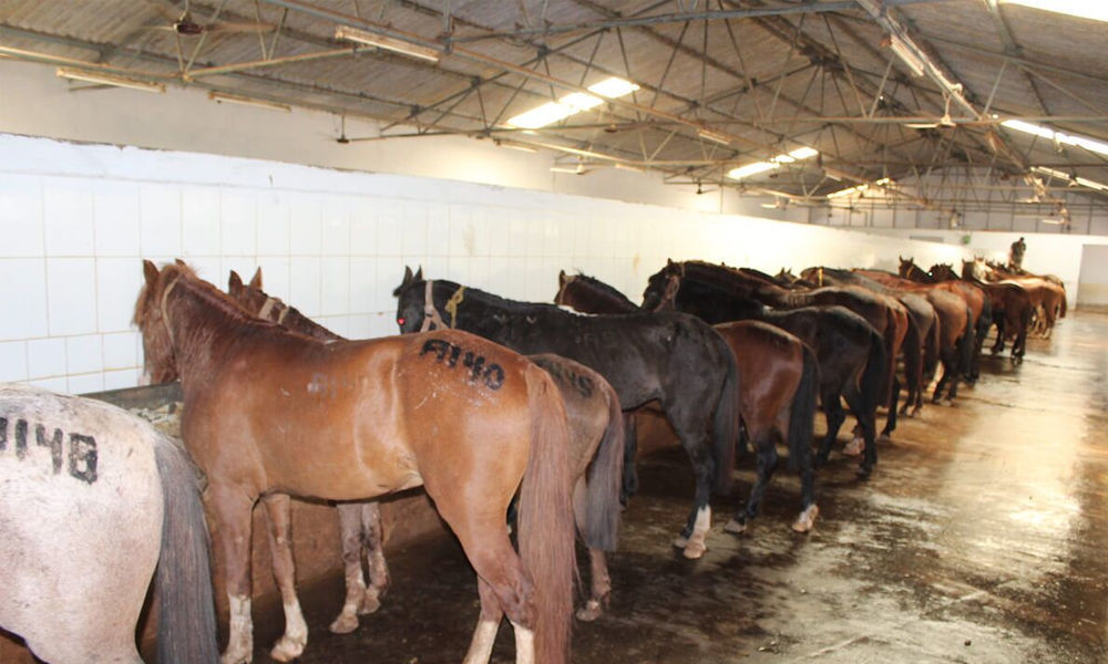 Plea opposes use of horses for anti-venoms, toxins