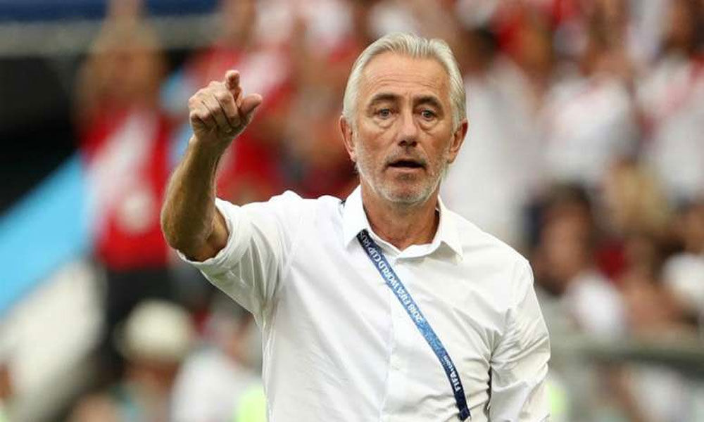 Soccer: Van Marwijk appointed coach of United Arab Emirates
