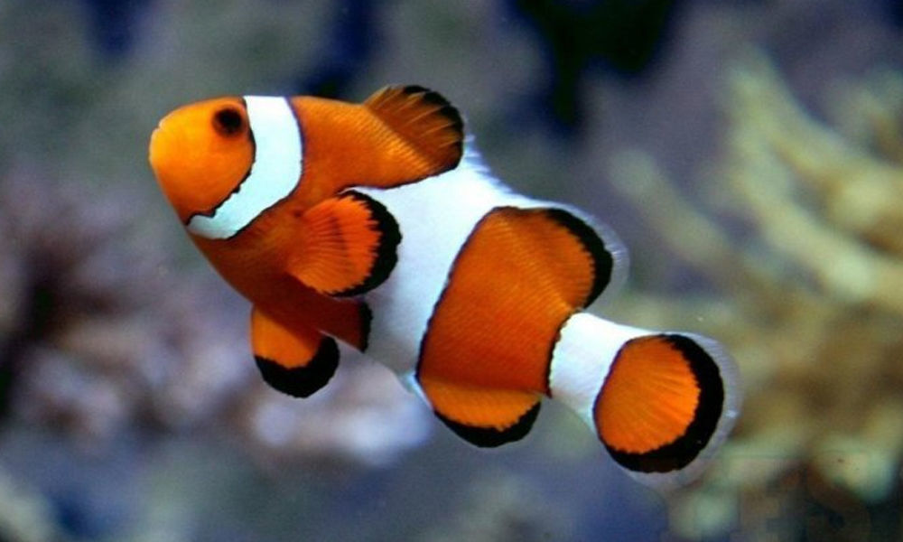 How fish adapt to climate change
