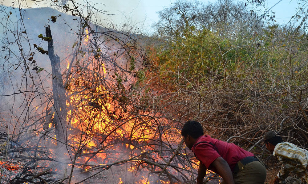 TTD gears up to prevent forest fire