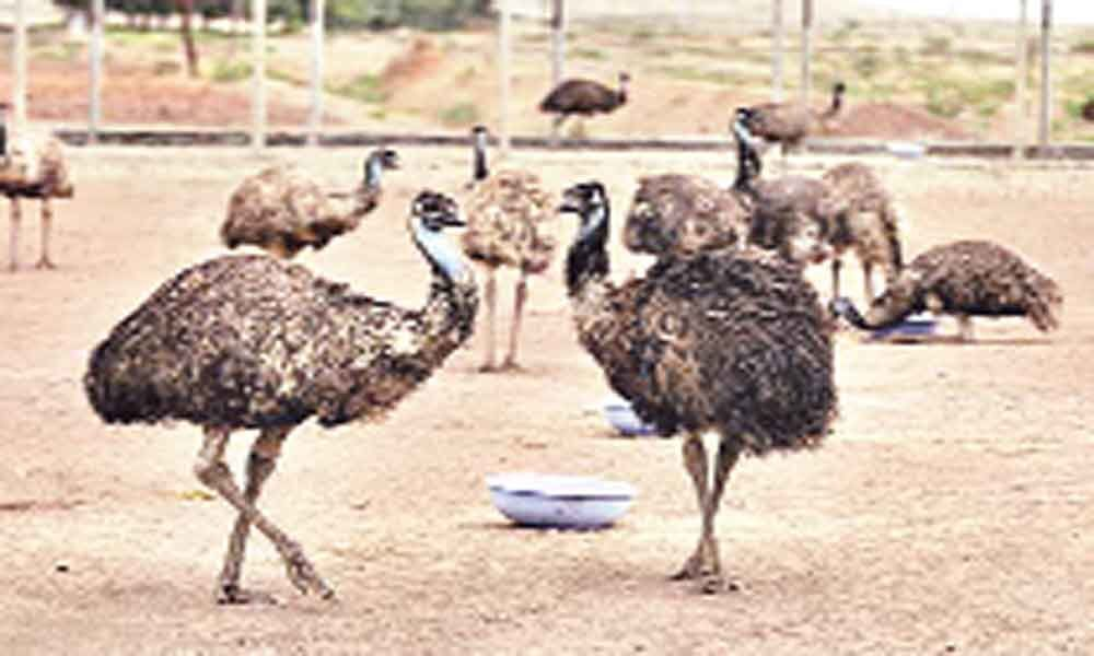 The great Emu bubble bursts; farming in red