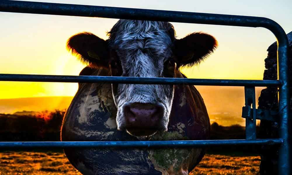 Earth Day Movie: Cowspiracy