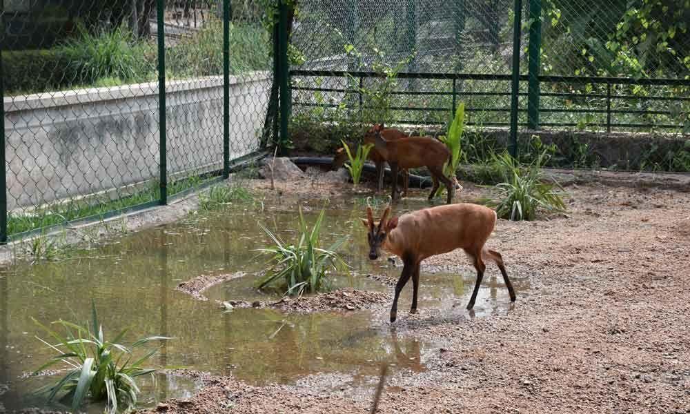 Get to hear hoarse barking calls of deers