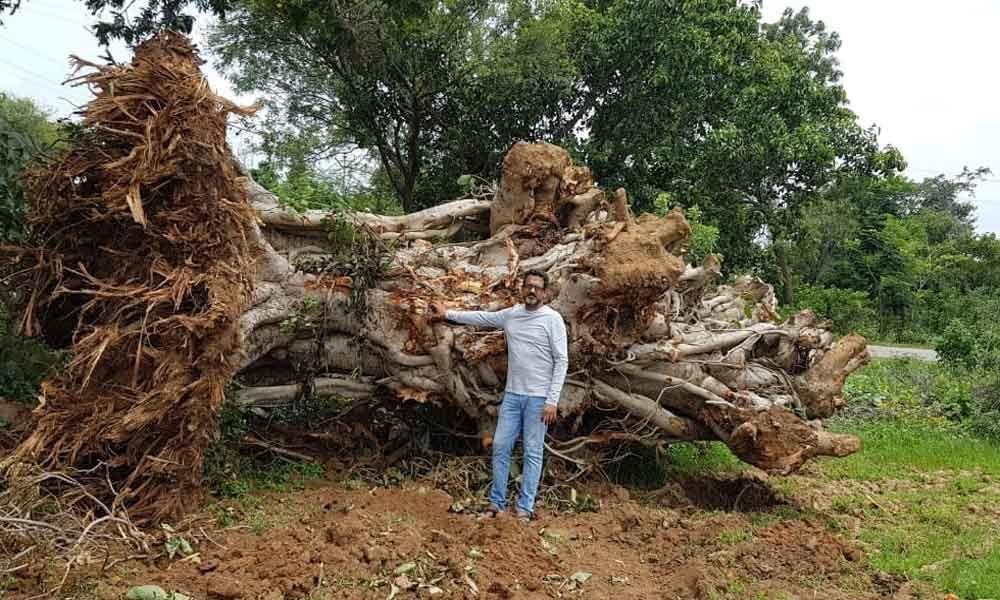 Vata Trust saves trees ordered to kill