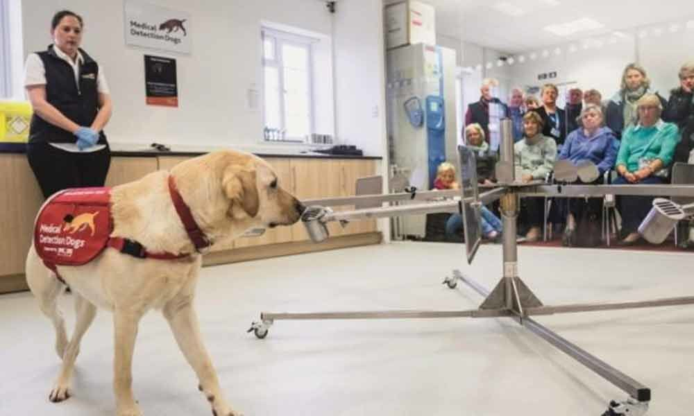 Dogs can sniff out cancer in blood with 97% accuracy