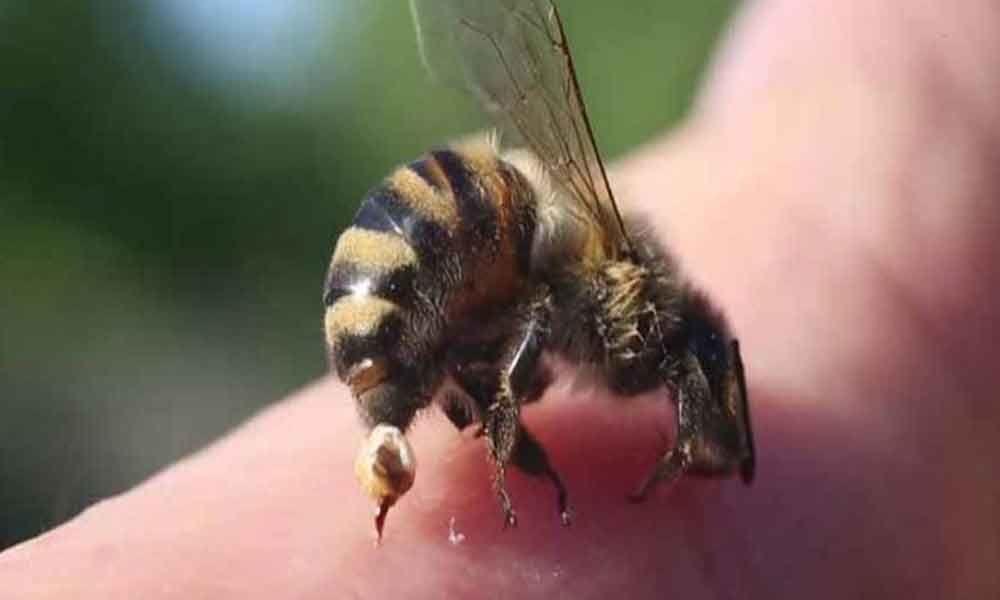 Muzaffarnagar cane farmer dies in bee attack