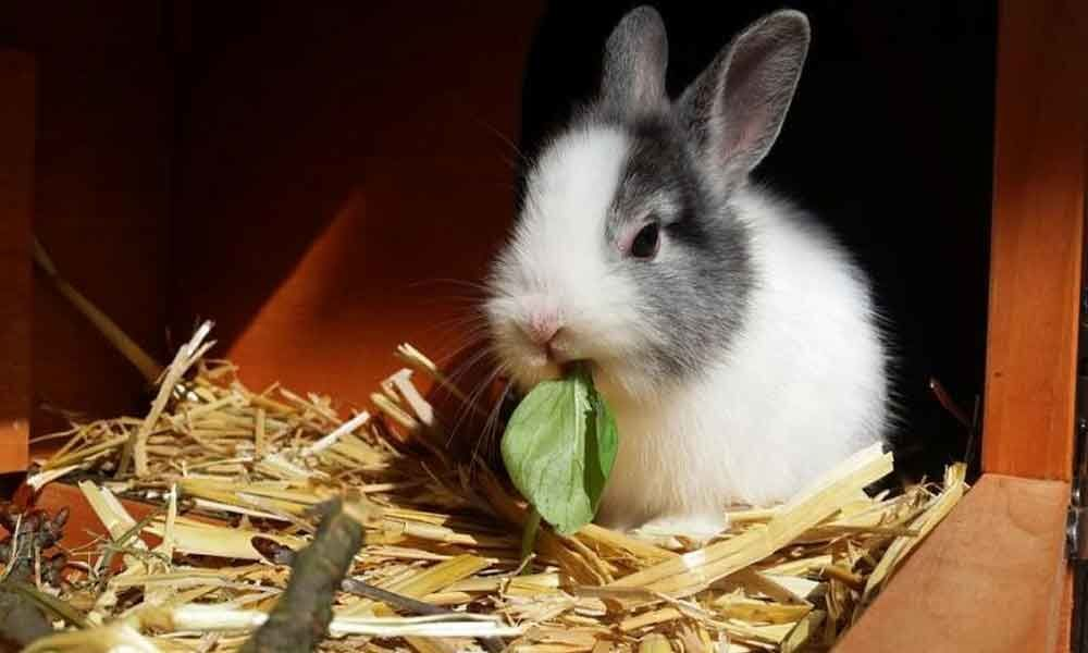 California bans sale of bunnies during Easter
