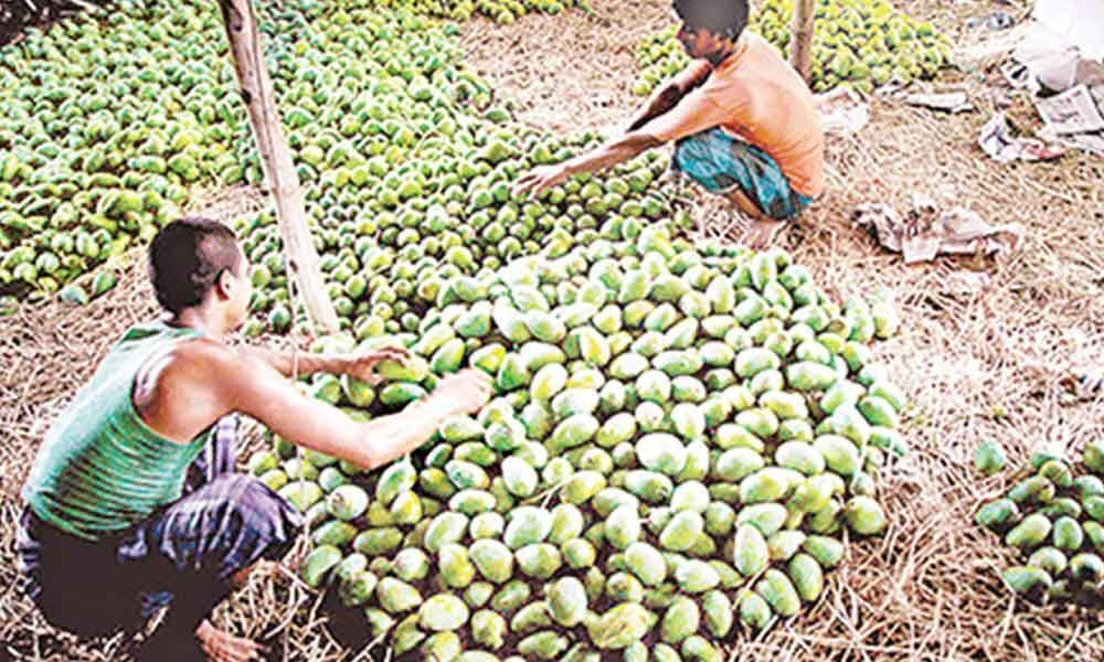 Untimely rains damage horticulture crops worth 1.31 cr in Anantapur dist