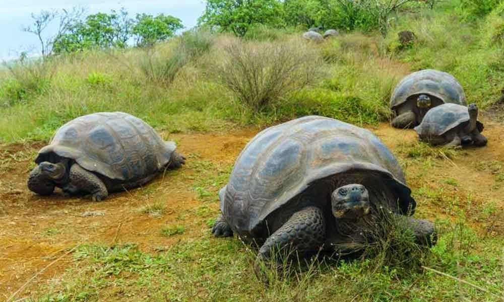 Environmental conditions affecting tortoise
