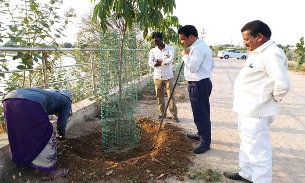 Telangana State of saplings inspected