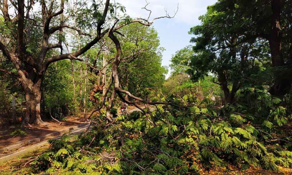 Over 637 trees uprooted in city