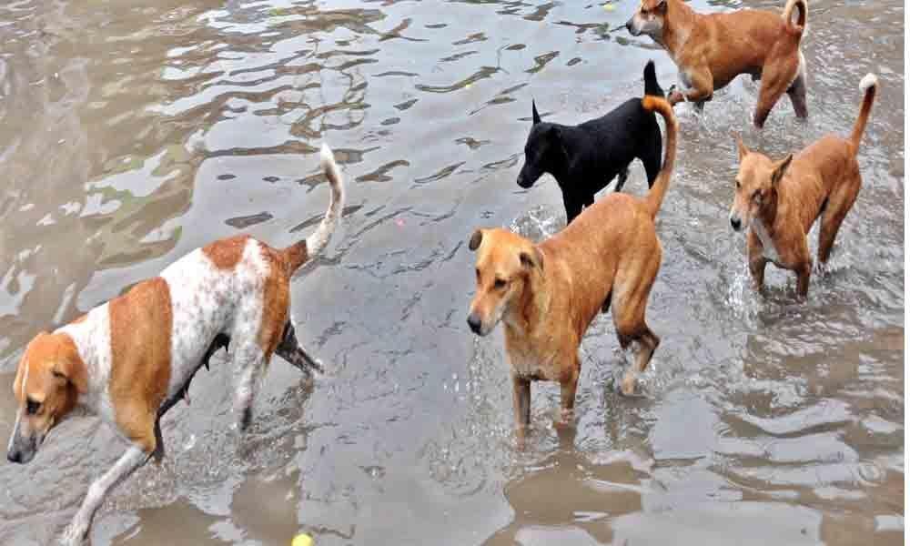 Stray dog menace haunts citizens in Rjy