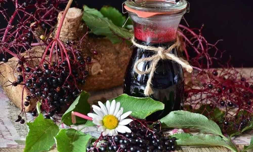 Consumption of elderberries essential to counter influenza