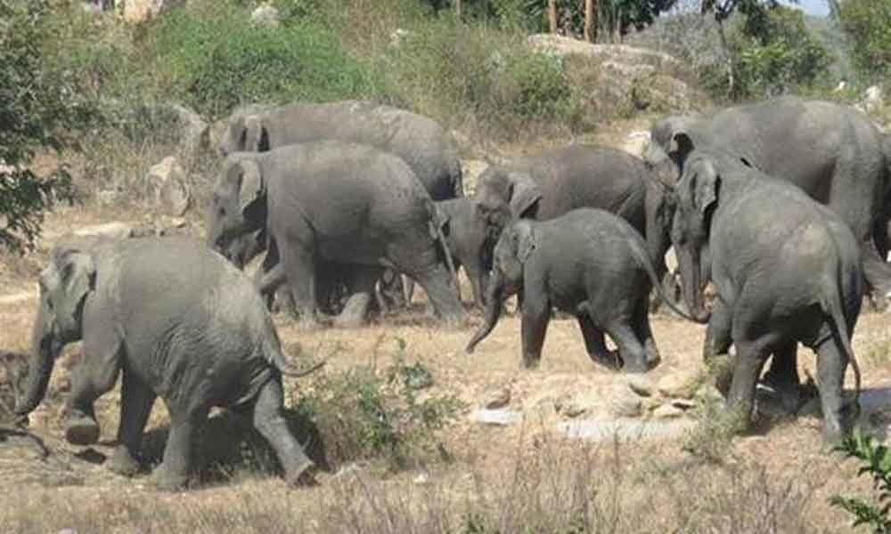 Elephants attack village in Chittoor, cause damage to crops