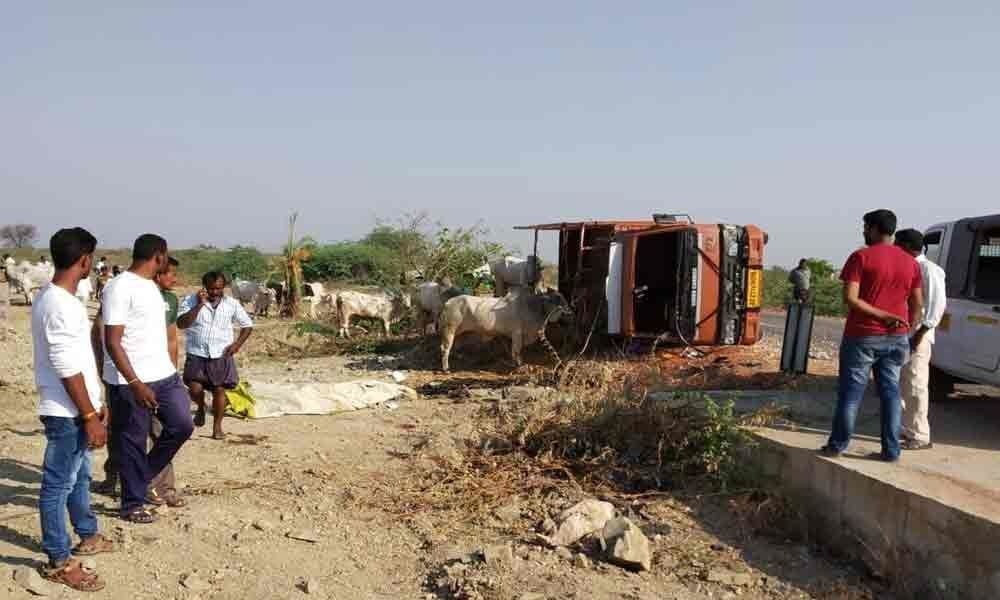 Farmer dies as truck carrying cows overturns