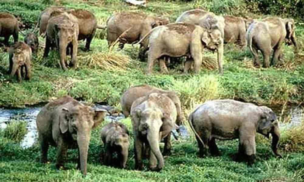 Elephants damage standing crops in Kuppam