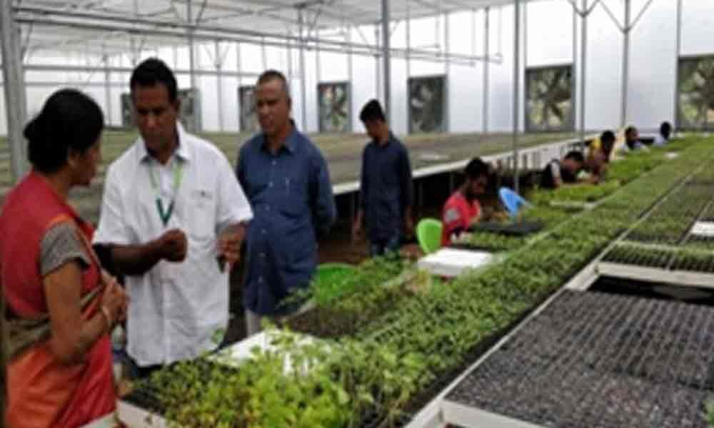 Boost to Protected Cultivation planned