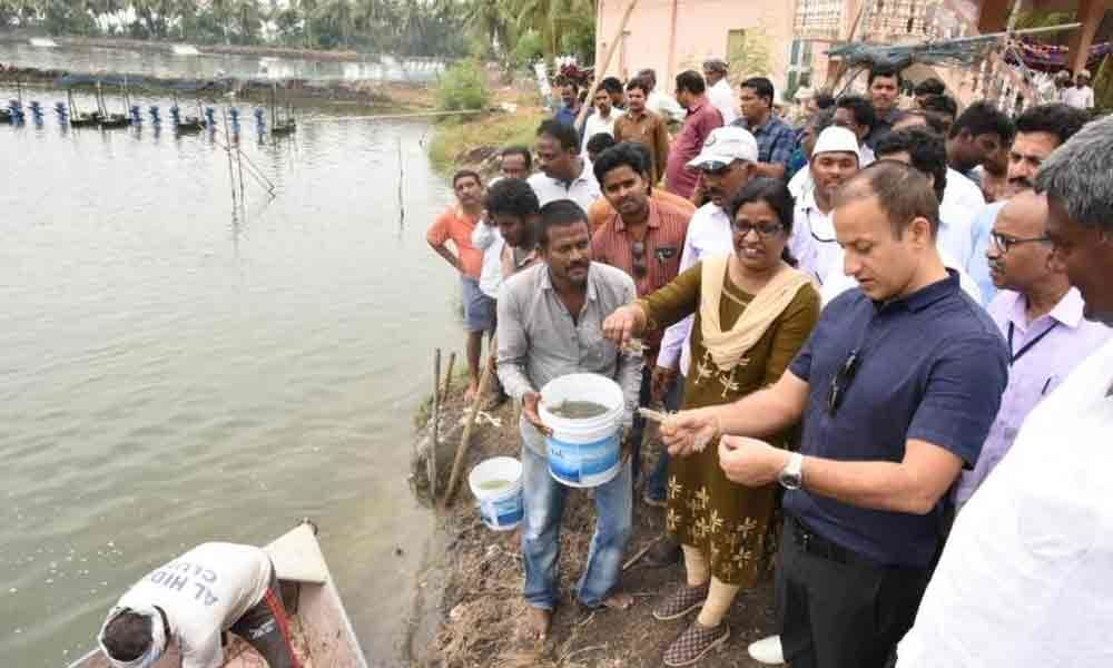Government to conduct study to improve aqua productivity