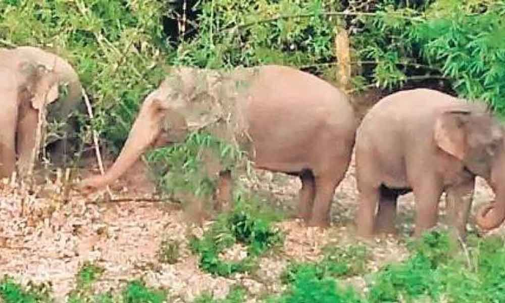 Elephants attack in Srikakulam district