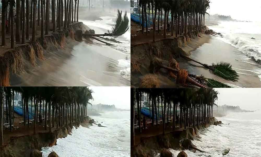 Coconut trees at RK beach are falling down due to soil erosion