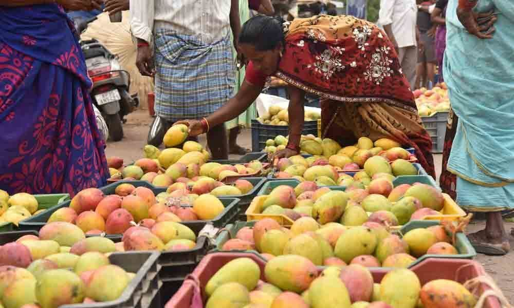 Dip in production dims hopes of mango growers in Visakhapatnam