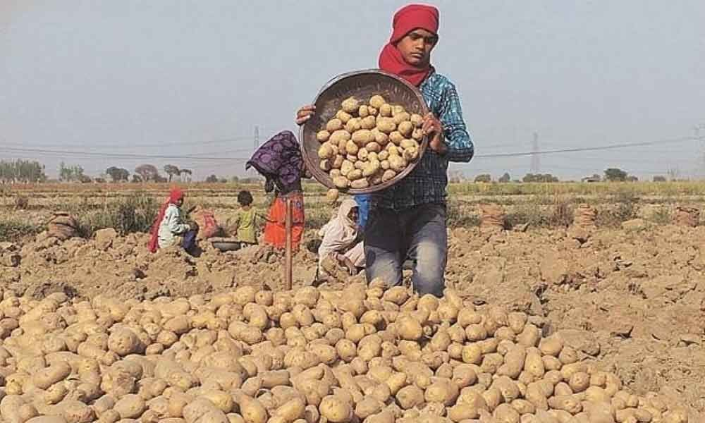 Farmers need protection from multinationals