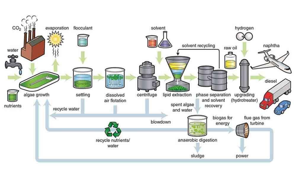 Research underway to produce biodiesel from biowaste