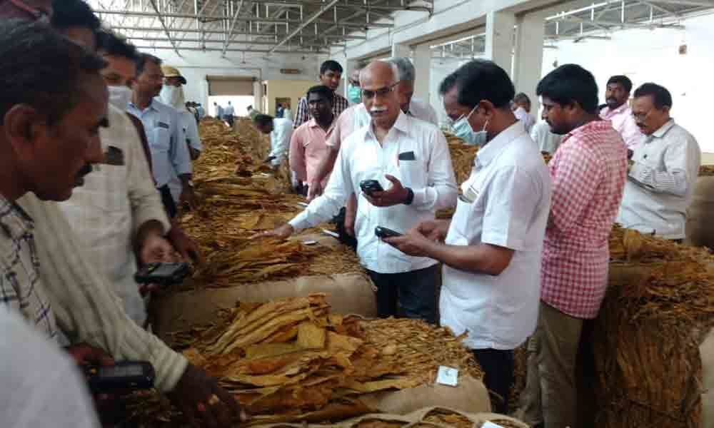 Rejection of low-grade tobacco worries farmers in Ongole