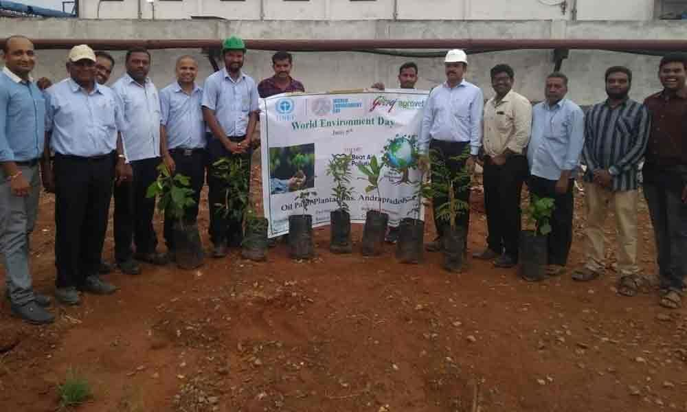 4,000 saplings distributed on World Environment Day