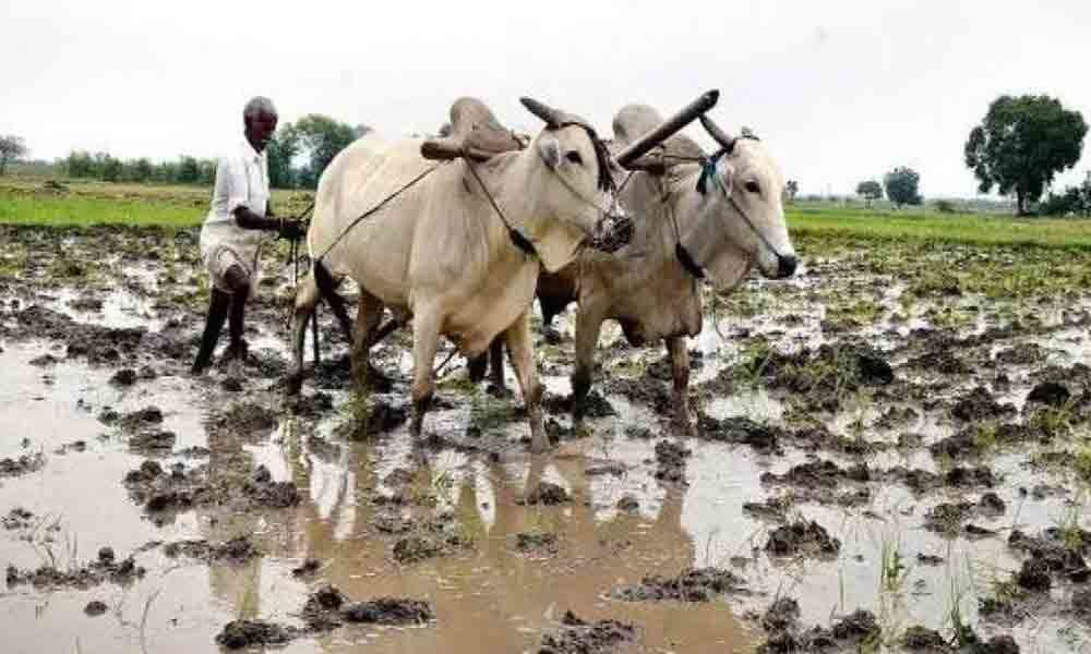Bootless govt schemes force farmers to borrow from money lenders in Adilabad