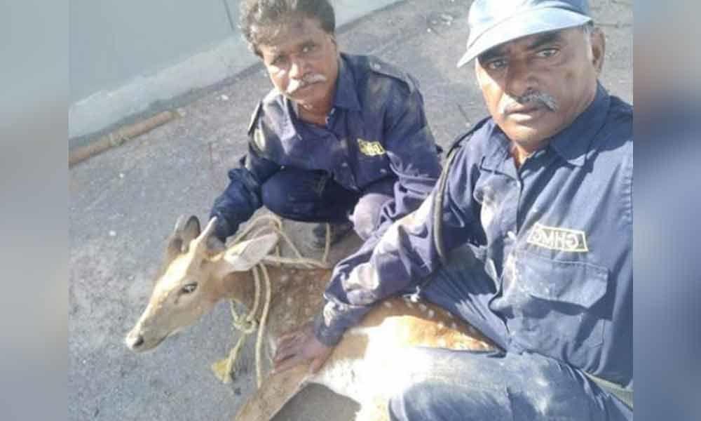 Deer falls in lake in Hyderabad, rescued