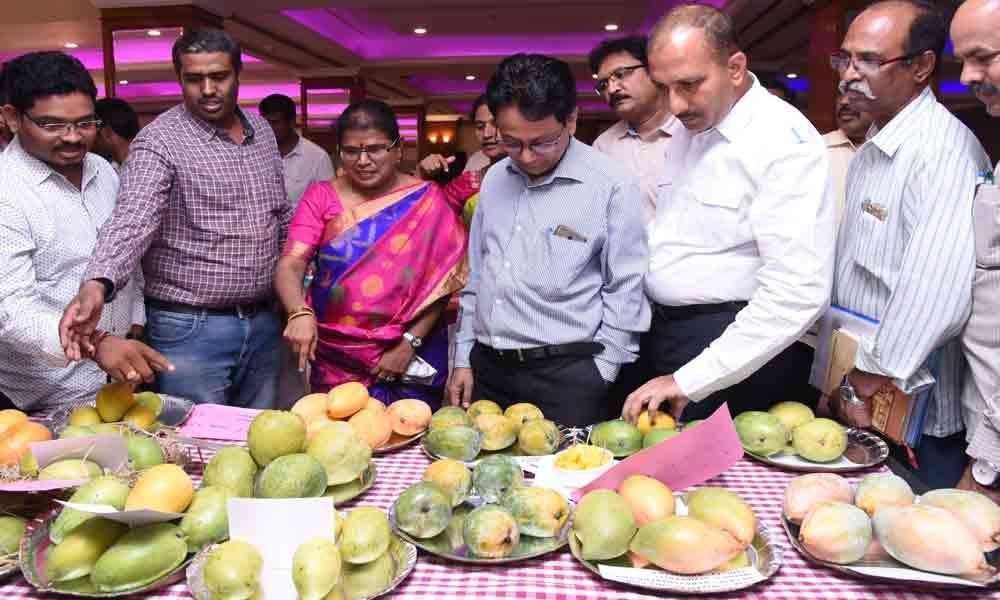 Farmers seek awareness on mango export varieties