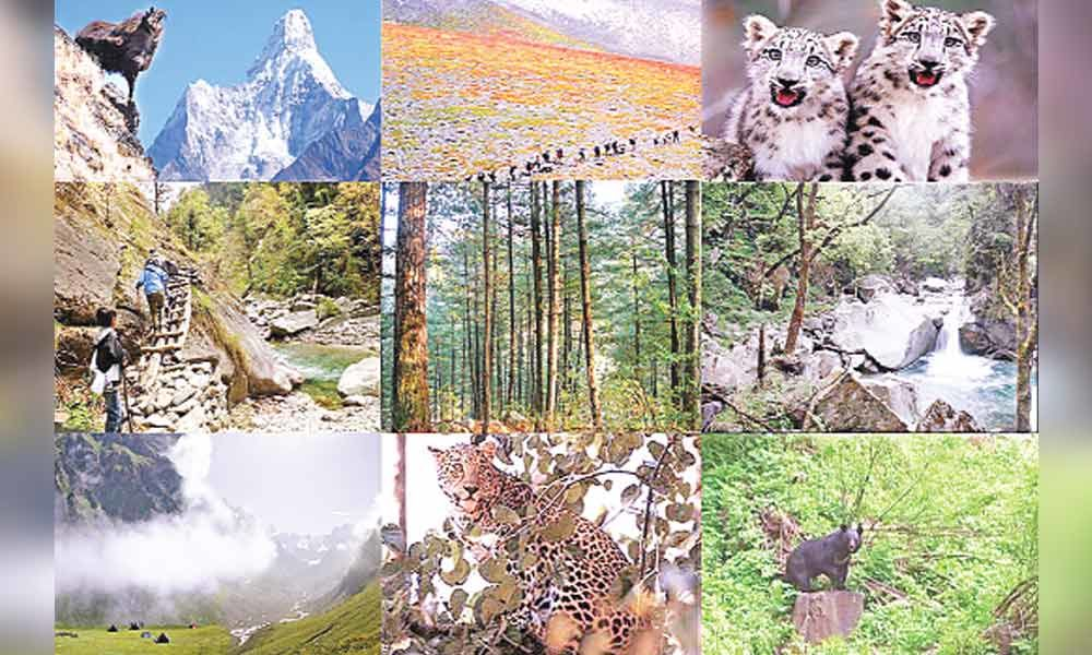 Want to test nerves? Trek to Great Himalayan National Park